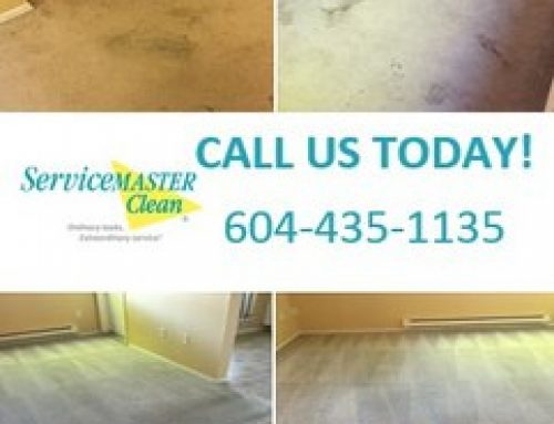Amazing carpet cleaning result!